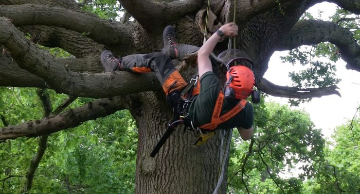 Why You Might Require The Services Of An Arborist