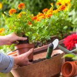 8 Easy Winter Maintenance Tips To Prepare Your Garden To Thrive In Spring