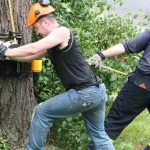 Tree And Hedge Management: It's A Good Call